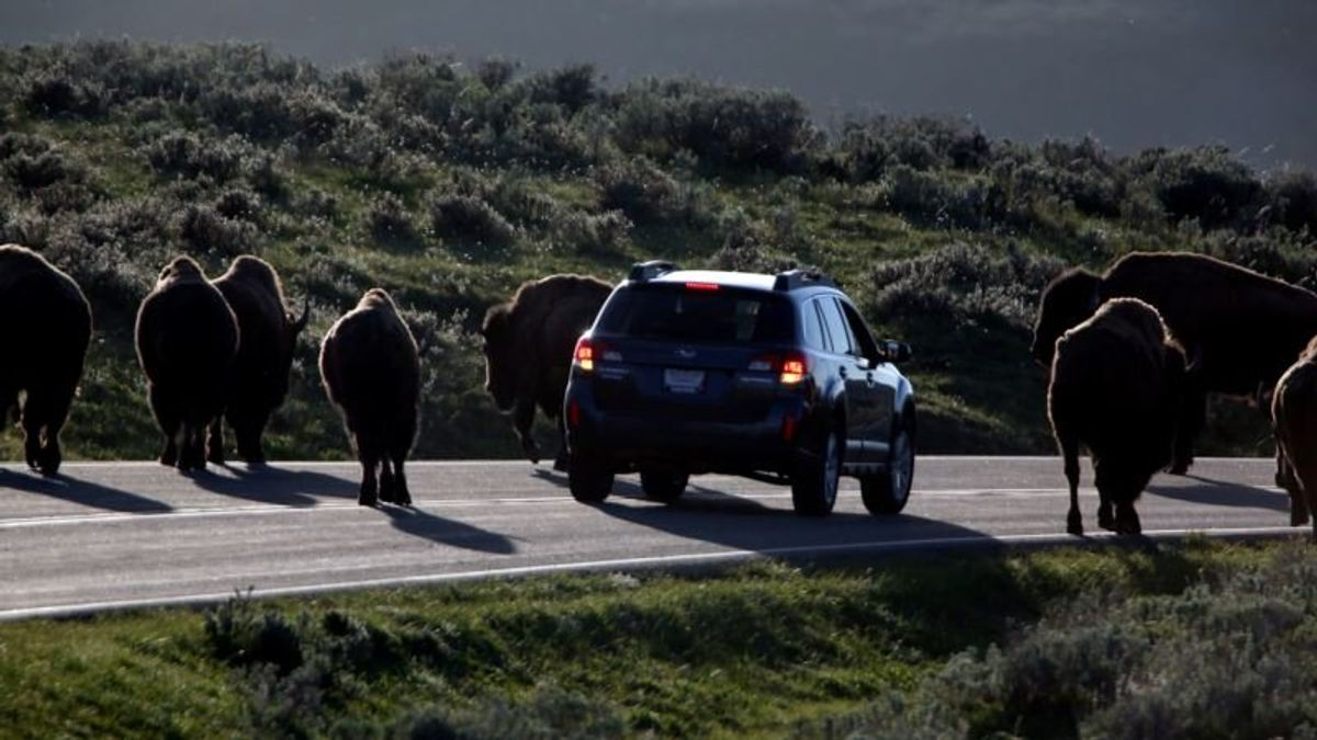 US Agency Endorses Plan to Block New Mining Near Yellowstone