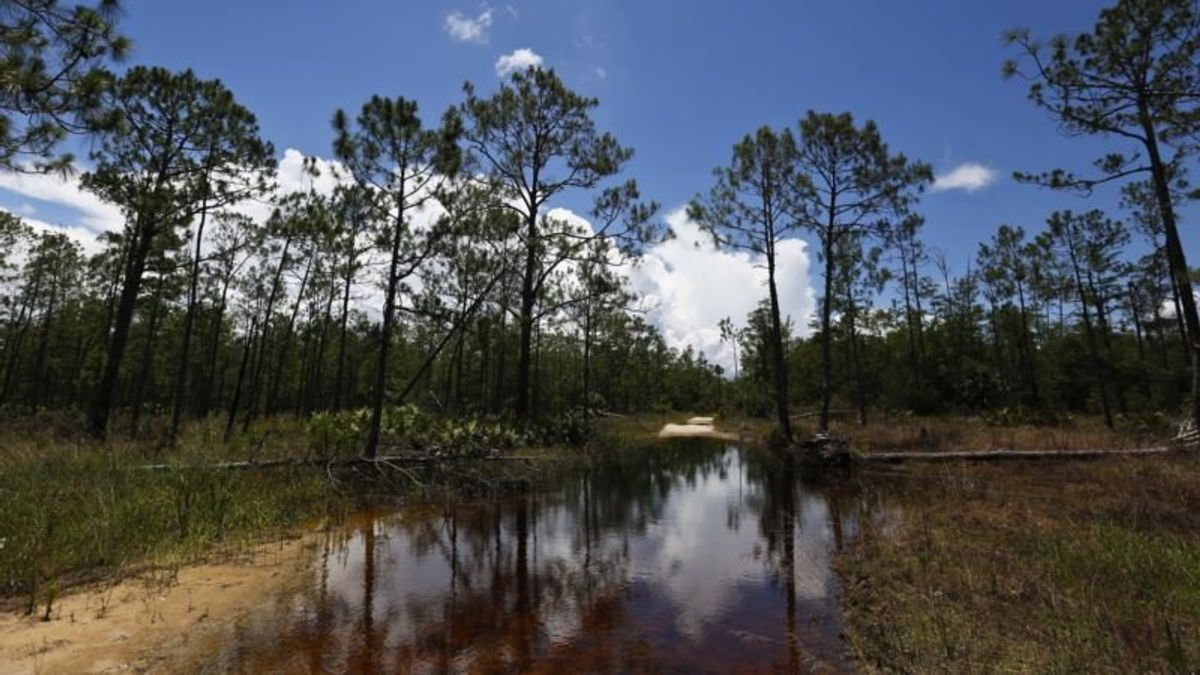 New Water Rules Mark Latest Trump Rollback on Environmental Regulations