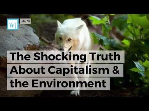 The Shocking Truth About Capitalism & the Environment That No Leftist Will Ever Tell You