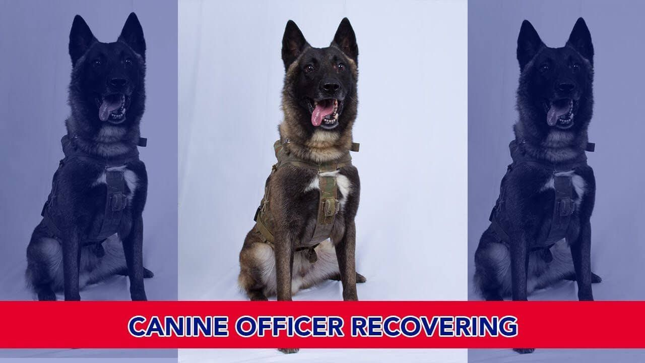 U.S. Canine Officer Recovering