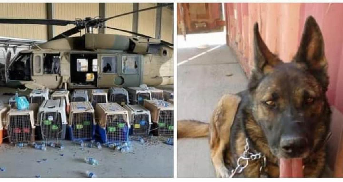 U.S. Leaves Service Dogs Stranded In Afghanistan