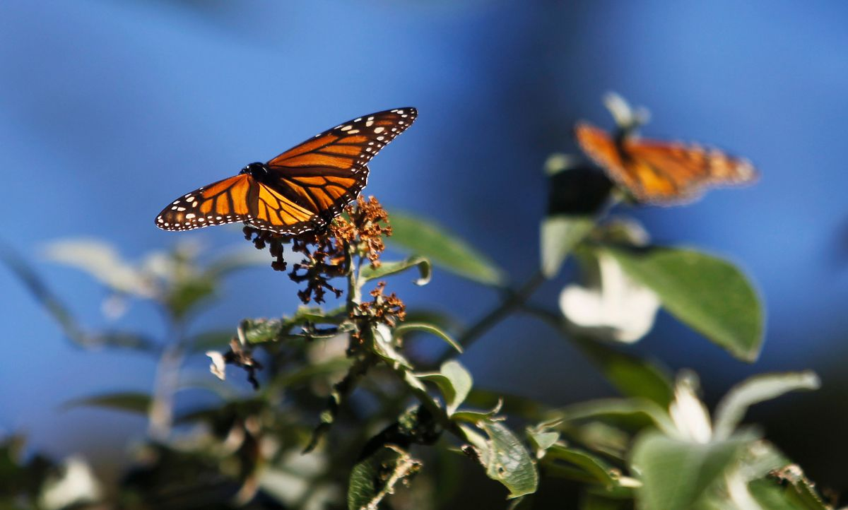 States, Conservationists to Sue to Stop Changes to Endangered Species Act