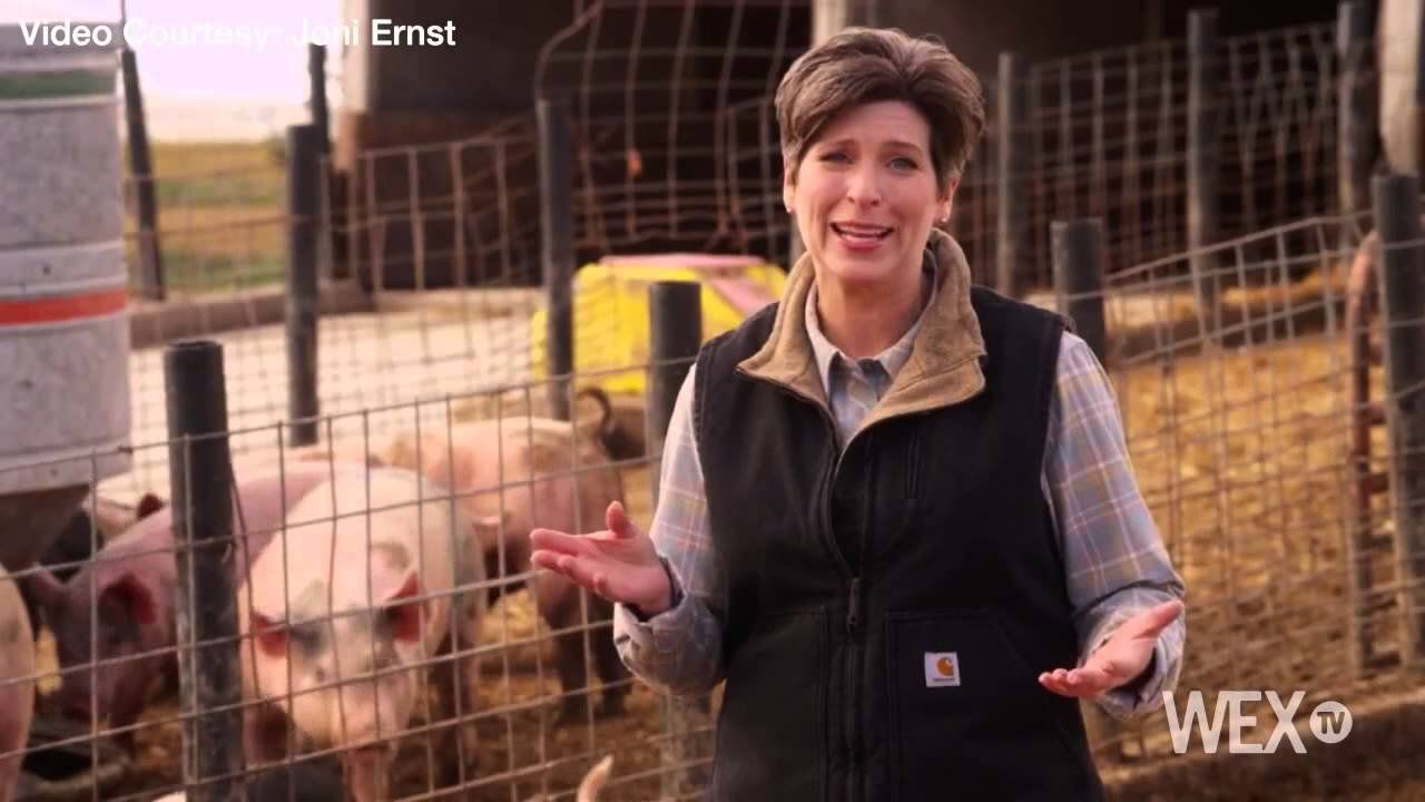 The hogs are back in new Joni Ernst ad