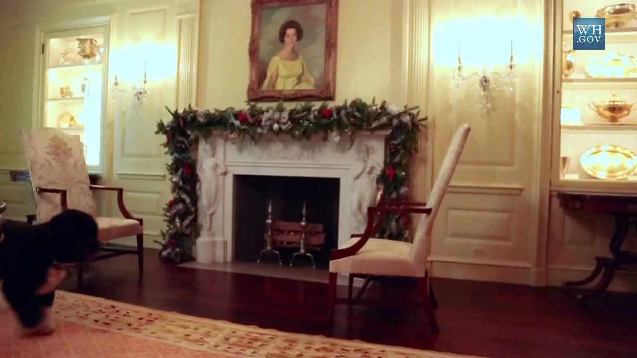Bo Obama inspects the White House 2012 Christmas decorations