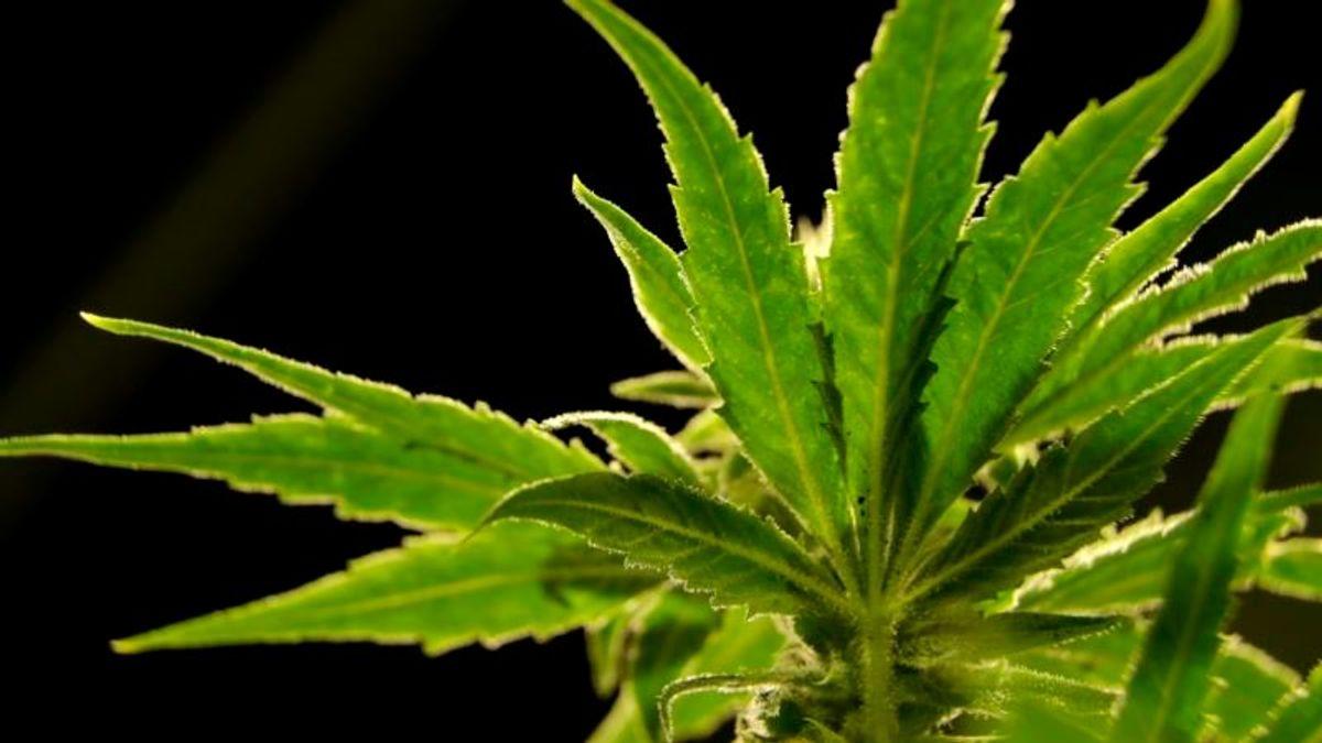 Illinois Governor Announces Plan to Legalize Marijuana